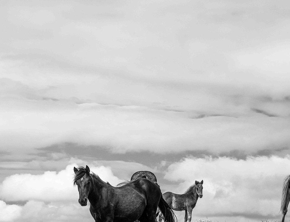 wildhorses #04