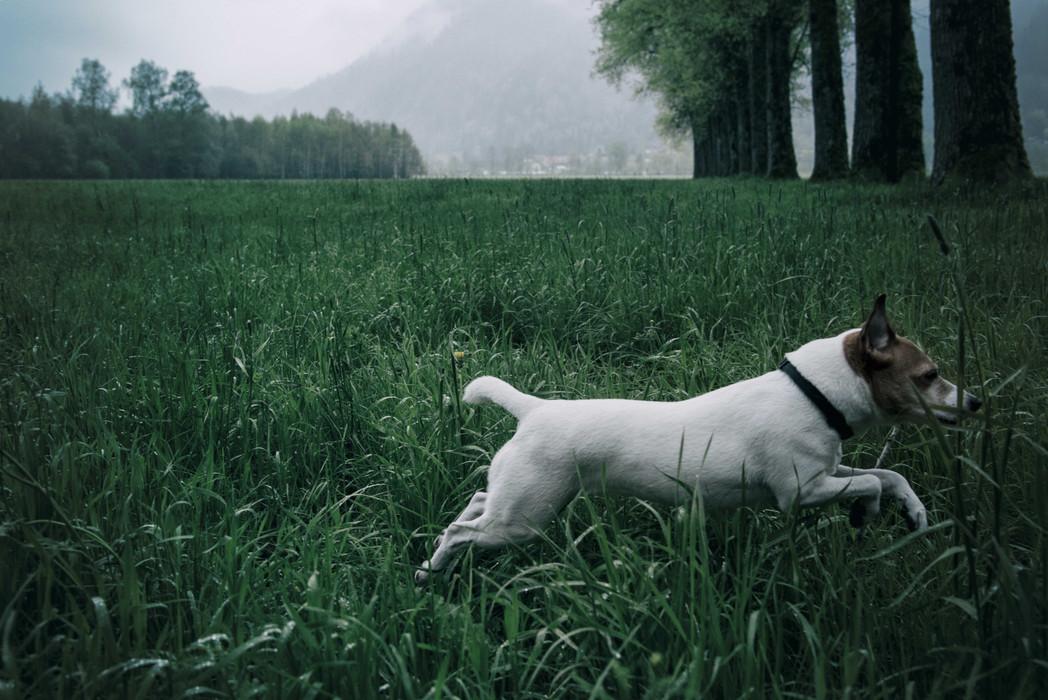happy Ali in austrian fields