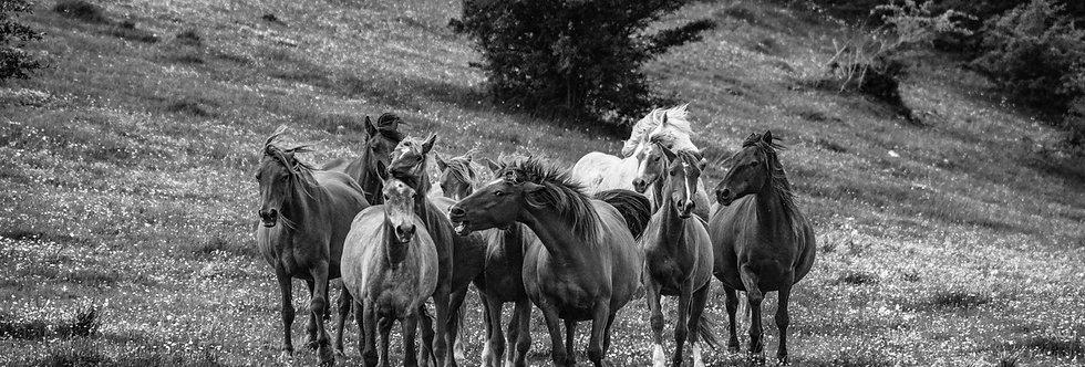 wildhorses #12