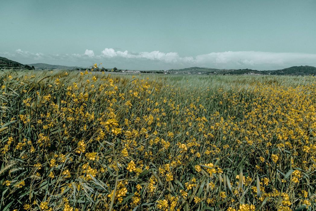 Maremma in may, Tuscany 2018
