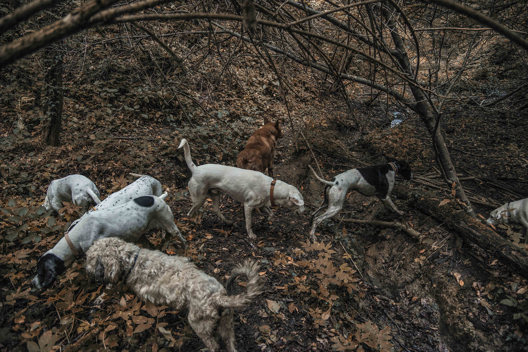 rescued dogs free in the forest