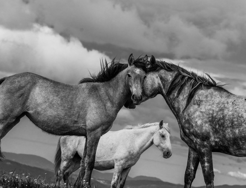 wildhorses #02