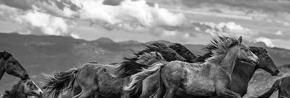 wildhorses #13