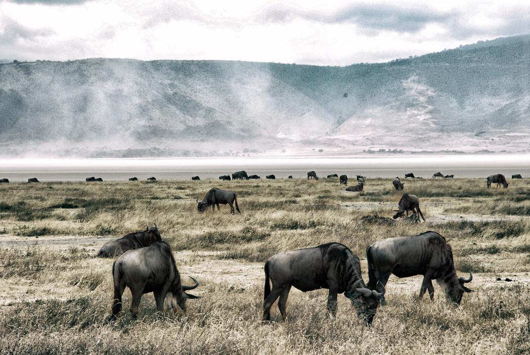 Tanzania , Serengeti park