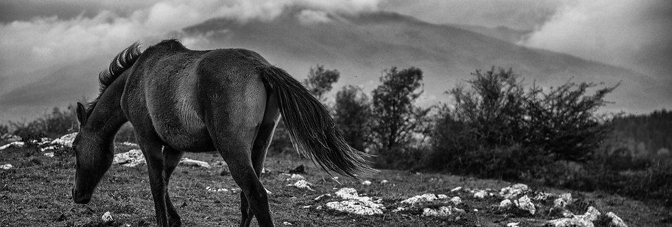wildhorses #08