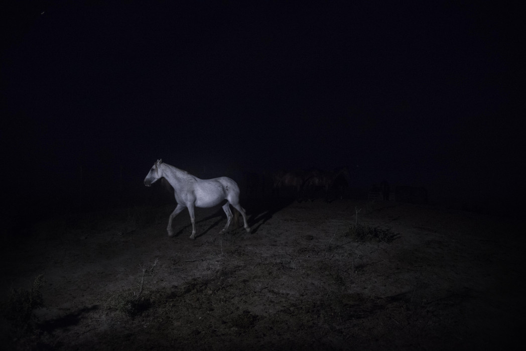 full moon horse shooting