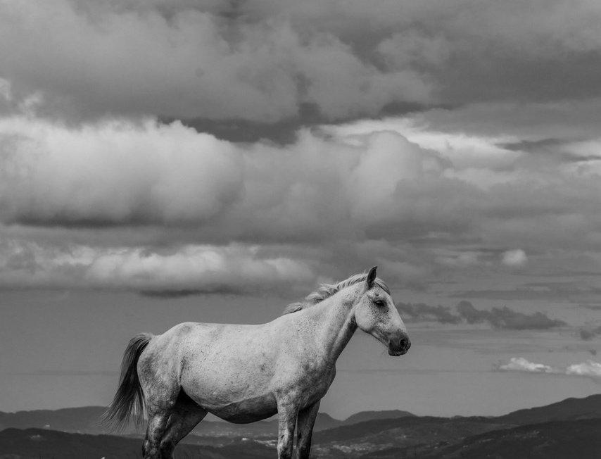 wildhorses #03