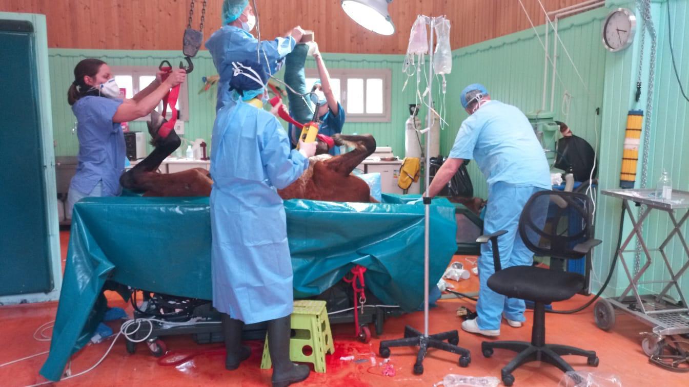 Neri in sala operatoria. Clinica Andromeda. Aprile 2019