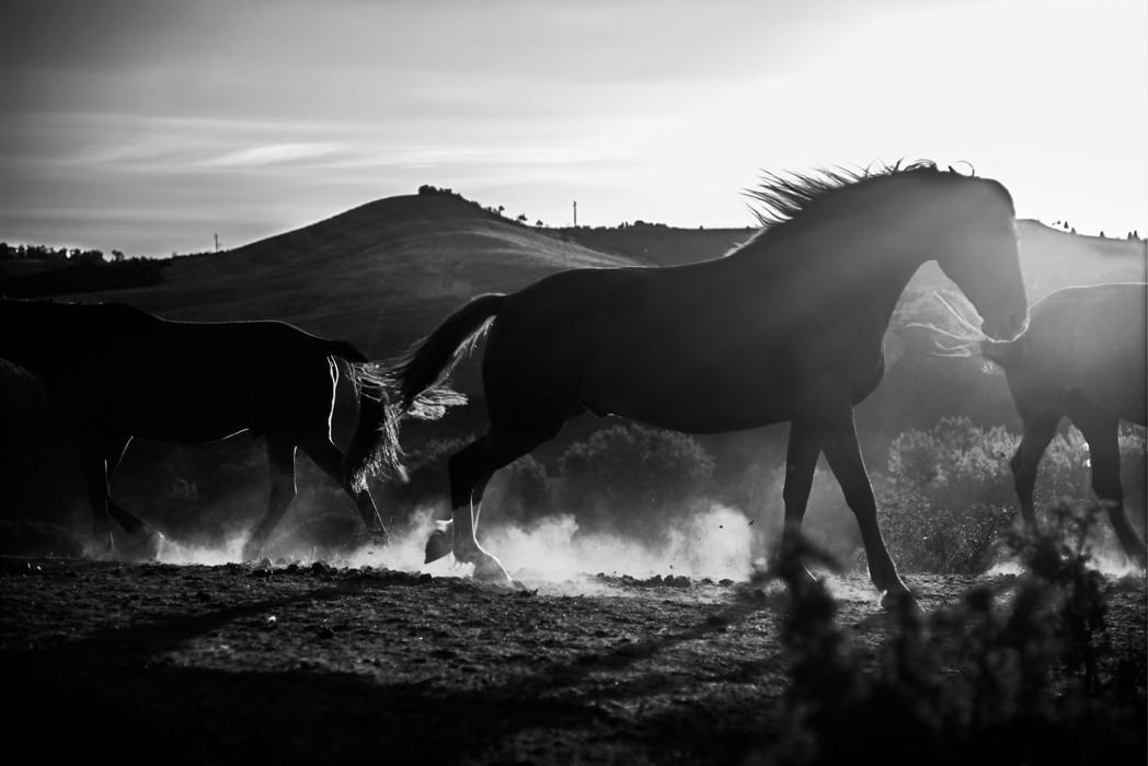 sunrise and free horses