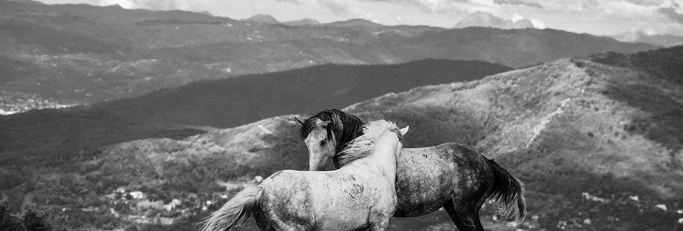wildhorses #10