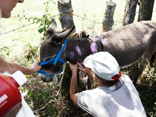 La storia del sequestro di Colleferro, Italian Horse Protection