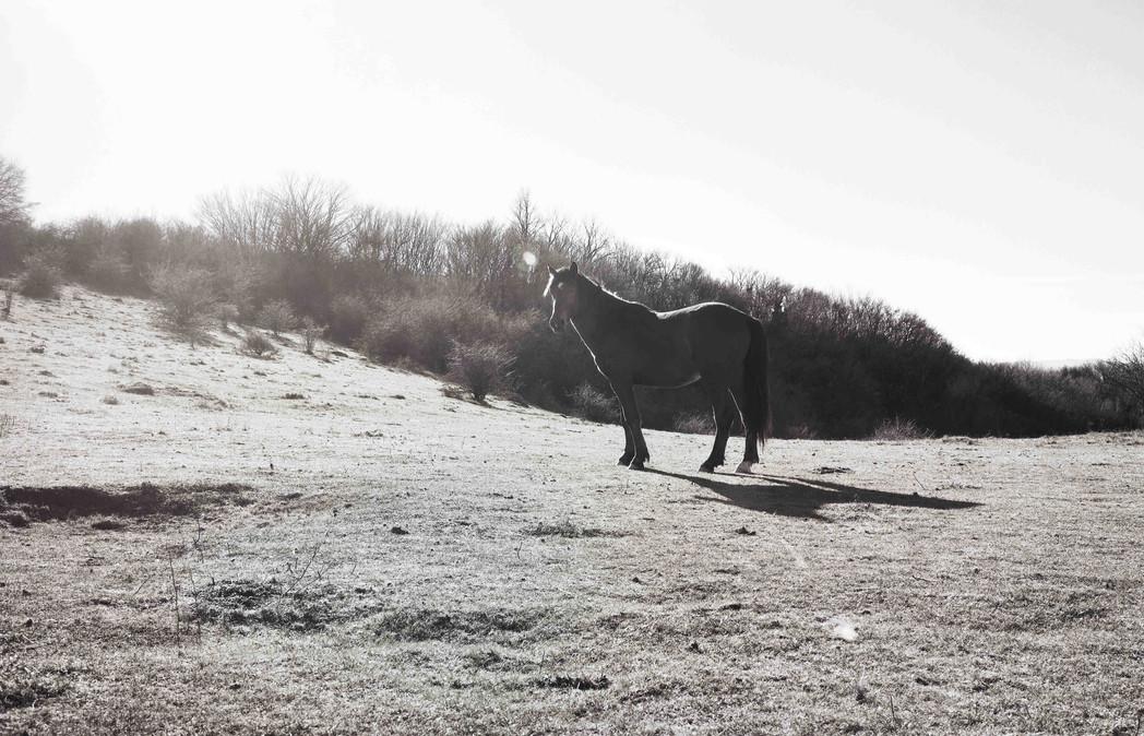 wild horse on Monte Calvana, Tuscany