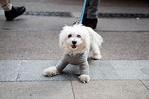 遊び心の子犬