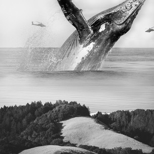 Whale-min.jpg