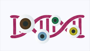 50 more genes for eye colour identified