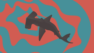 Sharks use earth's magnetic field as GPS