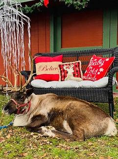reindeer_edited.jpg