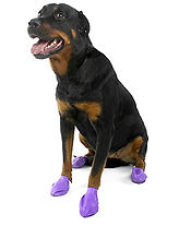 sticky pawz, rubberdog socks, disposable dog shoes, paw protection