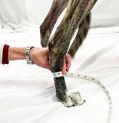 measure dog's wrist