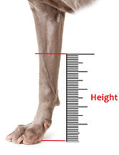 Dog Ankle Height