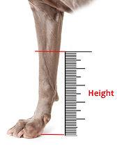 Dog Leg Height Measurement