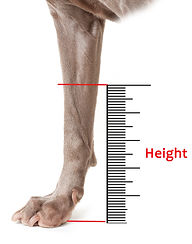 Dog Leg Height Measurement