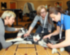Symposium on Therapeutic on Advances and Animal Rehabilitative