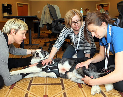 Symposium on Therapeutic on Advances and Animal Rehabilitative