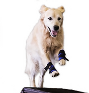 Carpo-Flex Sports Wrap, Light Support for Dog Legs
