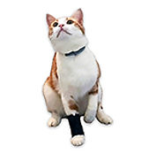 leg brace for cats, tiny leg brace for dogs, brace for tiny dog
