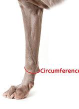 Dog Leg Circumference Measurement