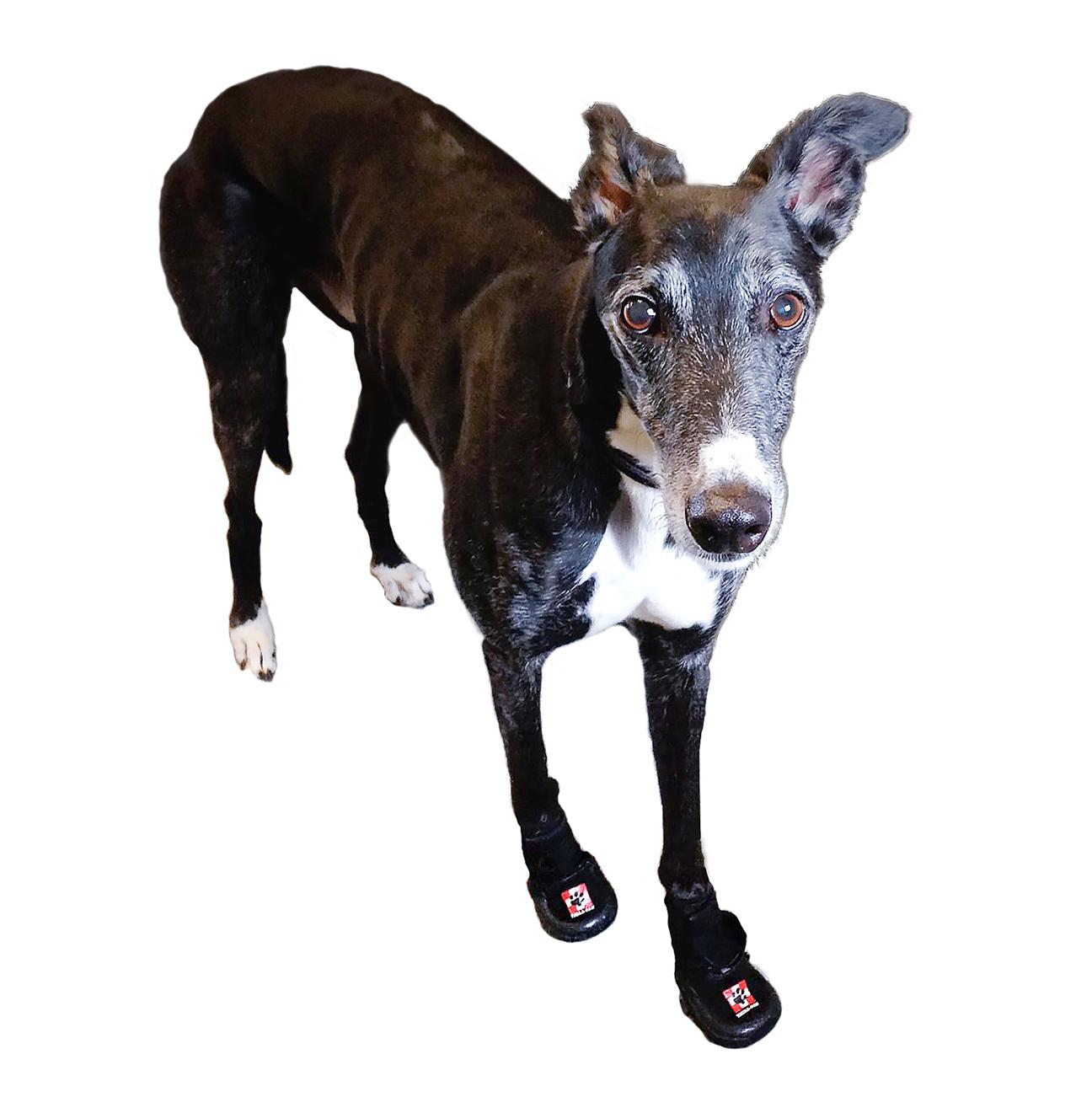Dog Boots | United States | Thera-Paw