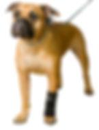 carpo flex x, dog leg brace, leg brace for dogs