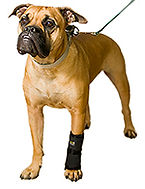 carpo flex x, dog leg brace, leg brace for dogs