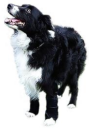 Thera-Paw Carpo-Flex-X, carpal wrist brace, dog splint, dog leg brace wrap