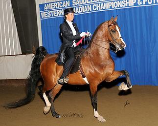AURORA SUMMER HORSE  SHOW