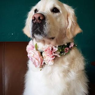 Collier chien Tours