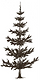 pine picture.png