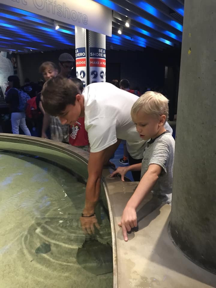 homeschool field trip to the baltimore aquarium touching the sting rays