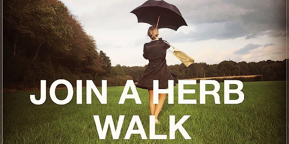 Herb walk - Foods & Medicines of the Hedgerows - led by Medical Herbalist with 20 years of experience (2)