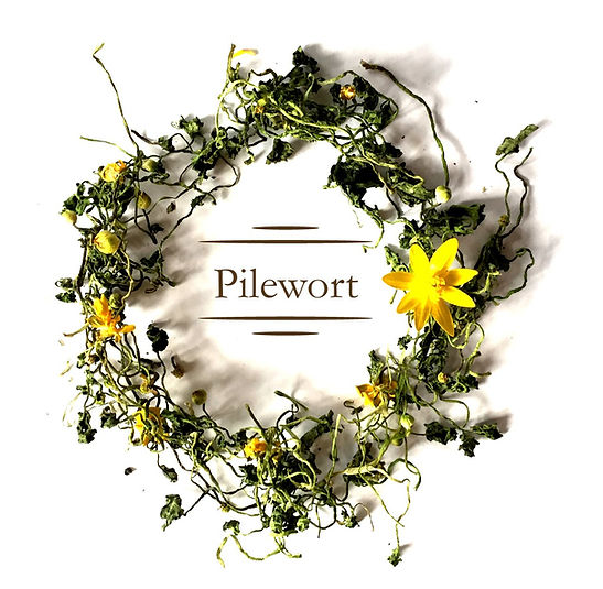 Pilewort%20card%20front%20pic_edited.jpg