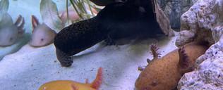 BTA Mona Vale Tutoring Academy - Axolotl Committee Meeting.JPG