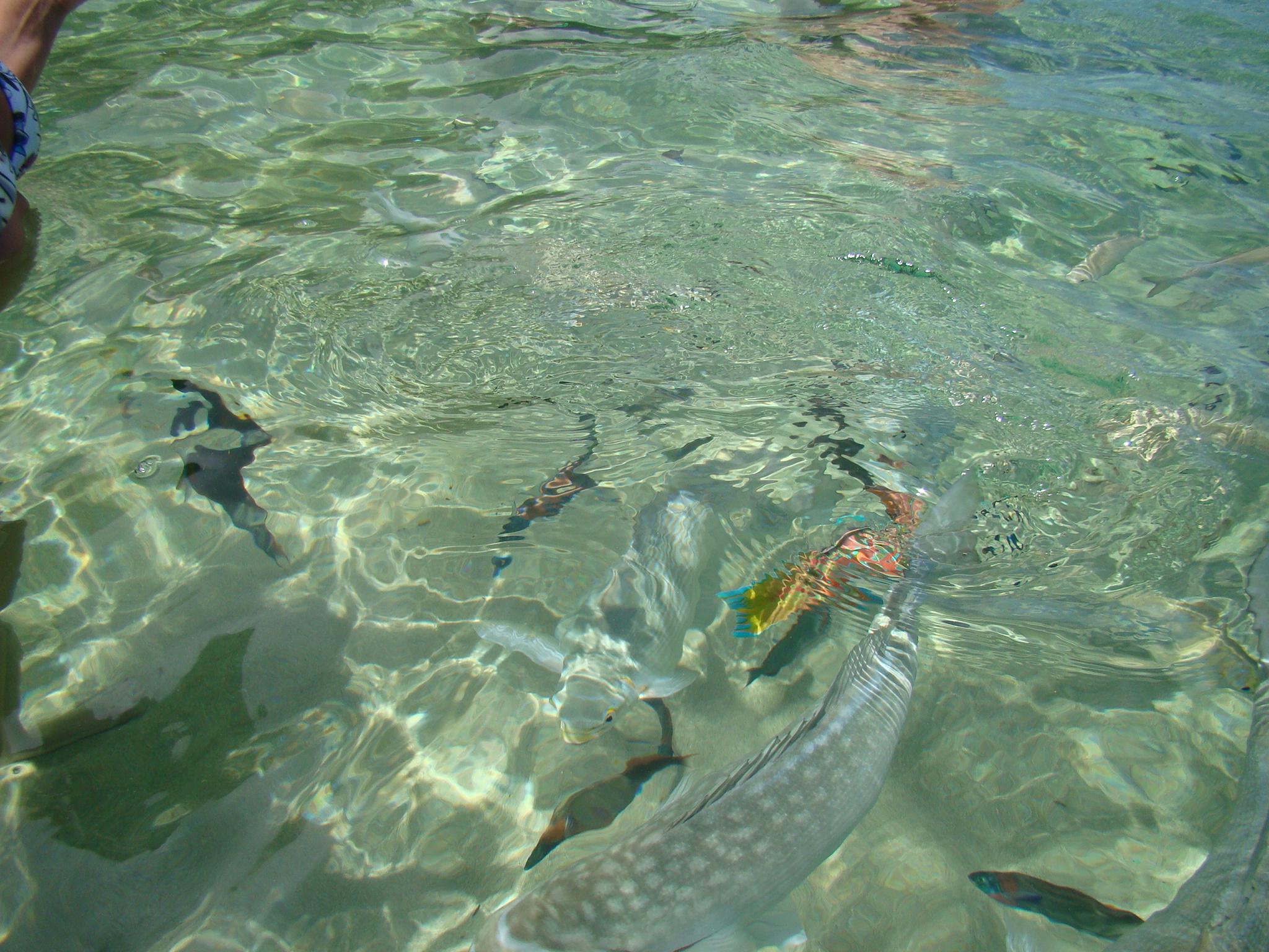 Fish Swim Around You