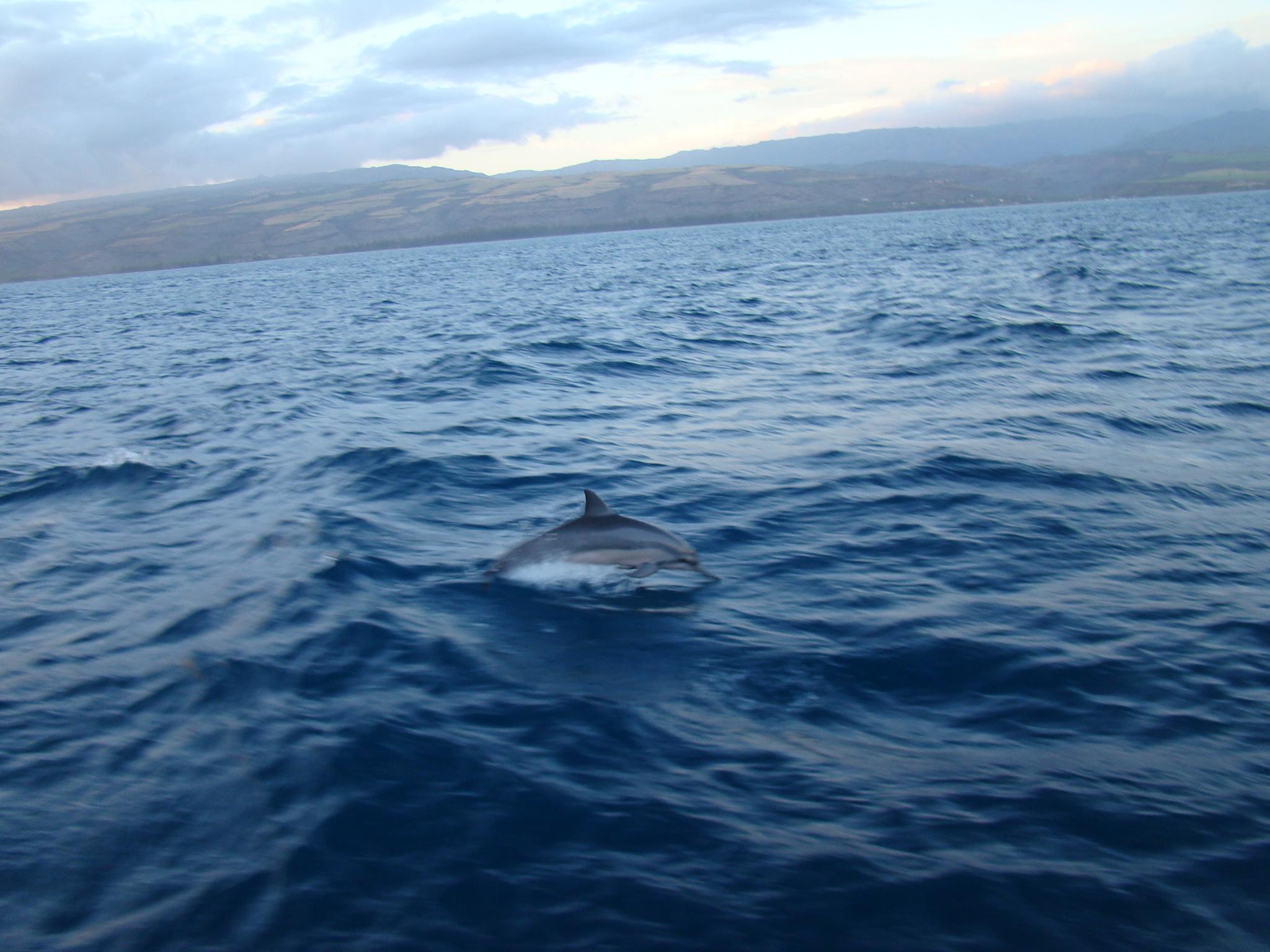 Dolphin on Sunset Cruise