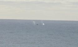 Lanai View of Whales