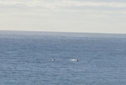 Lanai View of Dolphins