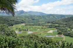 Scenic Overlook in Hanalei