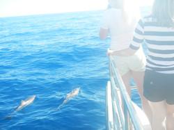 Dolphins on Holo Holo Sunset Cruise