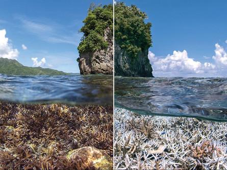 Saving Reefs