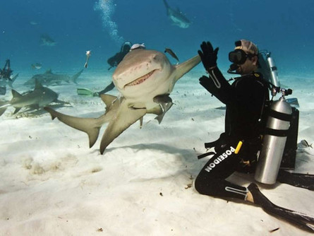 Sharks are Friends, Not Food